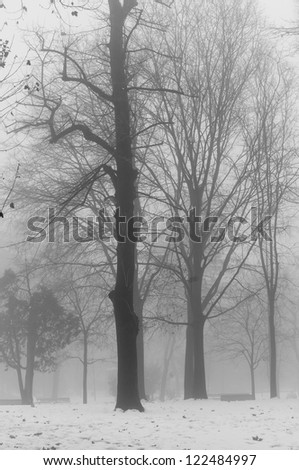 foggy winter landscape with snow