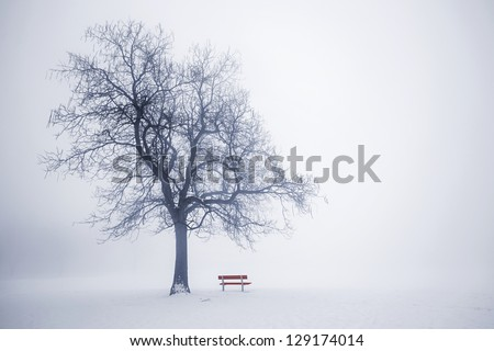 Foggy winter scene with leafless tree and red park bench in fog - stock photo