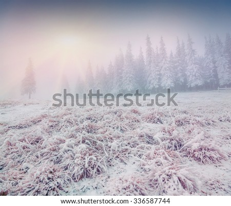 Foggy winter sunrise in the mountain forest - stock photo