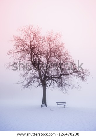Foggy winter sunrise scene with leafless tree and park bench - stock photo