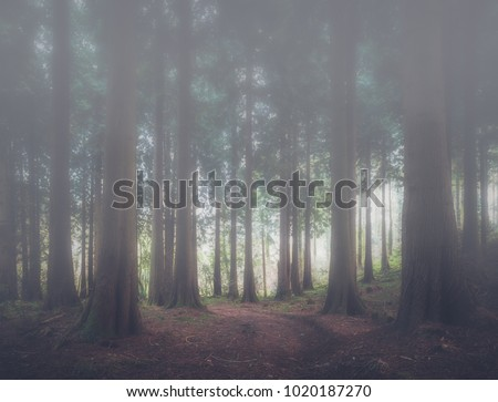 foggy woodland scene in cornwall uk
