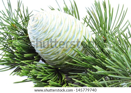 foliage and cone of cedar isolated on white - stock photo