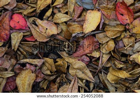 foliage,dry leave - stock photo