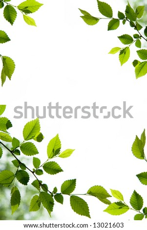 Foliage frame with green leaves