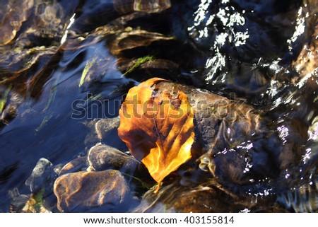 foliage in creek the autumn - stock photo