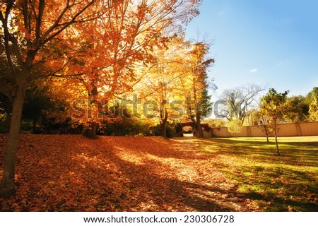 Foliage in Laz Anderson park in Boston - stock photo