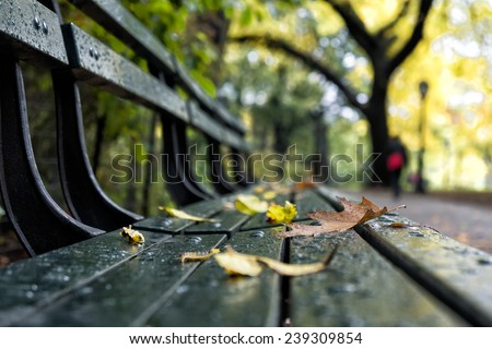 Foliage in New York - stock photo