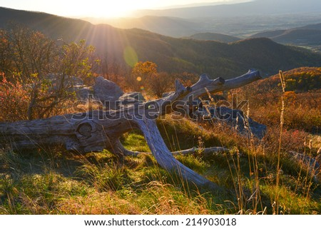 Foliage of autumn forest in Shenandoah National Park in Virginia, United States  - stock photo