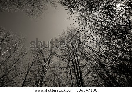 Foliage of trees viewed from below in a sunny day of spring on the shores of Brugneto lake, Liguria, Genoa, Italy  - stock photo