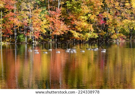 Foliage pond with mallard ducks, Canada geese and vibrant color water surface reflection - stock photo