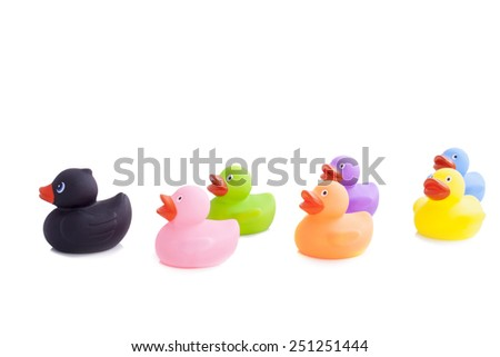 Follow the leader black duck isolated on white - stock photo