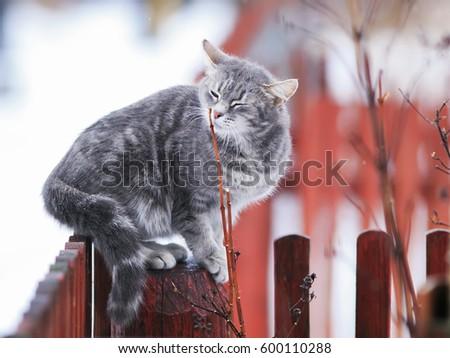 cat tapeworm symptoms