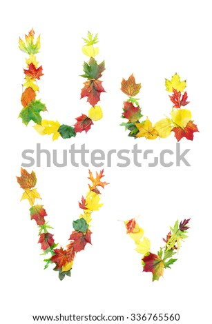 Font made of autumn leaves isolated on white. Letters u and v. - stock photo
