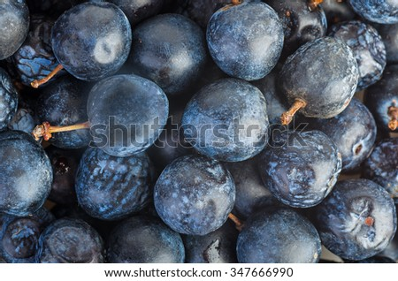 Food background: fresh and naturally dried blackthorn berries - stock photo