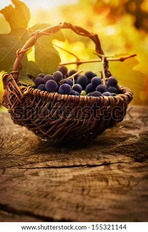 Food background. Grapes and vine leaf in basket on wooden table in autumn colors - stock photo