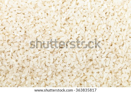 food background - short grains of uncooked white Kuban rice