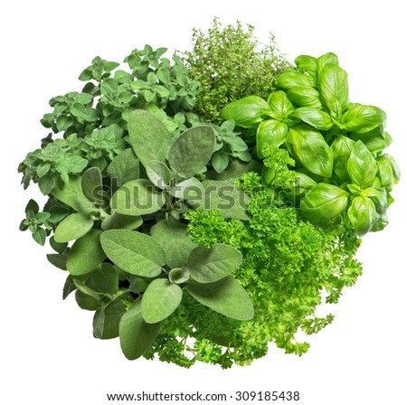 Food ingredients. Fresh herbs isolated on white background. Basil, marjoram, parsley, rosemary, thyme, sage - stock photo