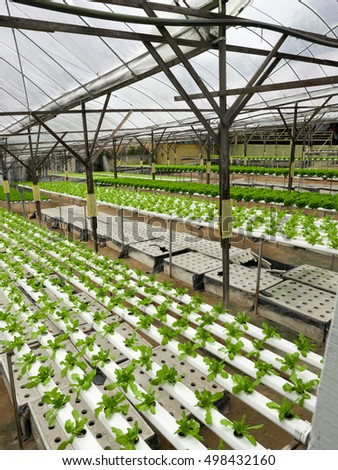 the usefulness of hydroponics in plant production Savvy gardeners are using humic acids to increase their indoor gardening harvest yield and quality humic acids are powerful, natural compounds that work wonders in a plants' root zone and inside plants.