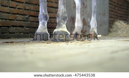 Foot of horse is standing at stable. Close-up