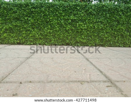 Foot wall and green leaf and flooring and plant in garden decorative background