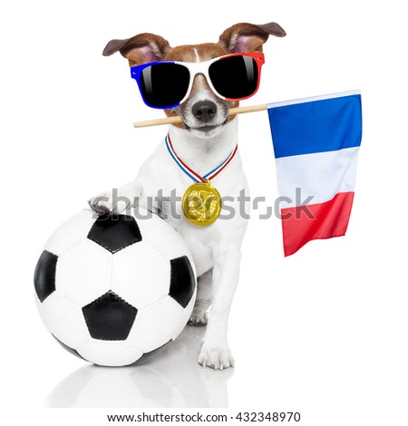 football championship jack russell dog with soccer football ball and french flag isolated on white background - stock photo
