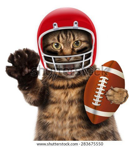 Football concept. Funny Cat playing American football. - stock photo