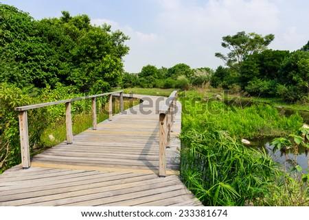 Footbridge in forest - stock photo