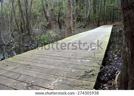 Footbridge in the maritime forest, Oak hiking trail, Myrtle Beach State Park, South Carolina, United States - stock photo