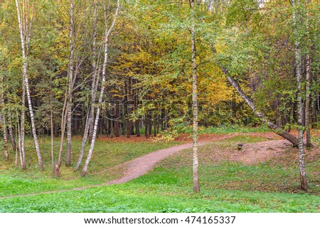 Footpath and forest in bright autumn colors