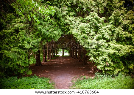 Footpath between green trees in the park - stock photo