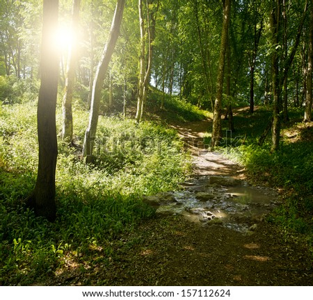 footpath between trees in green dark forest  - stock photo