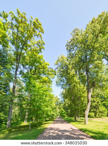 footpath between trees in green forest