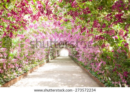 footpath in a botanical garden with orchids lining the path. - stock photo