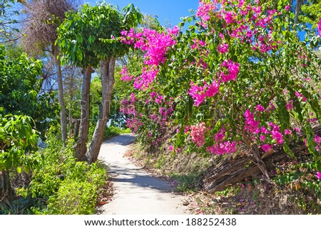 Footpath in a lush garden, Koh Phi-Phi, Thailand - stock photo