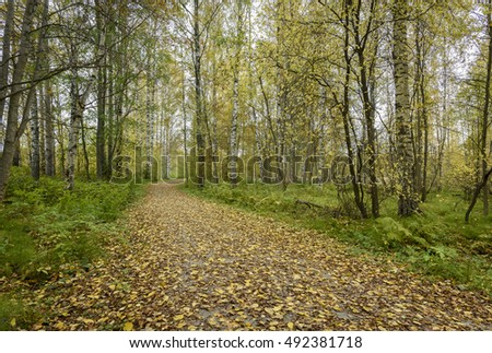 Footpath in autumn colors