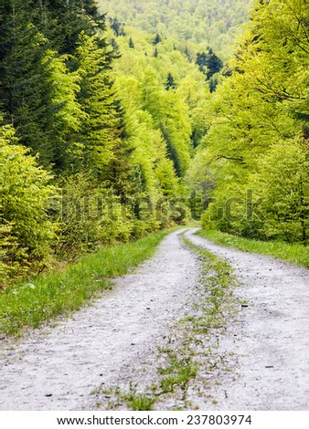 Footpath in green forest of Bieszczady Mountains, Poland - stock photo
