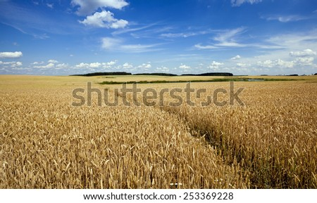 footpath in the field   - stock photo