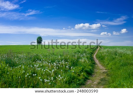 Footpath in the field with dandelions and blue cloudy sky