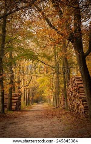 Footpath in the forest with autumn trees and sawn logs on both sides - stock photo