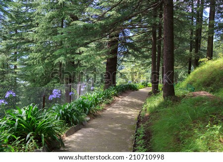 Footpath in the park of the estate of Nicholas Roerich. It is nice to walk around and enjoy the silence. - stock photo