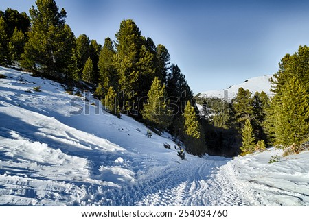 Footpath in white snow in a forest of green pines and firs on Dolomites mountains - stock photo
