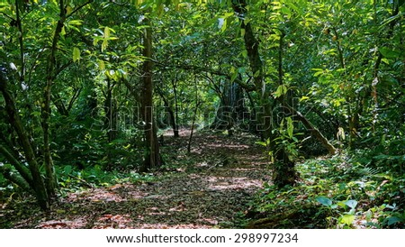 Footpath into the jungle with dense vegetation, Panama, San Cristobal island, Bocas del Toro - stock photo