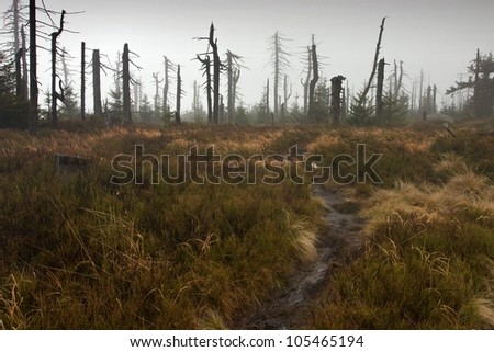 Footpath Leading to Dead Misty Forest on the horizon. - stock photo