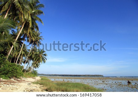 Footpath near palm tree plantation on the Pantai Sorak beach in Nias, Indonesia