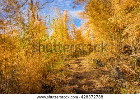Footpath of hiking trail in bamboo forest in autumn. - stock photo