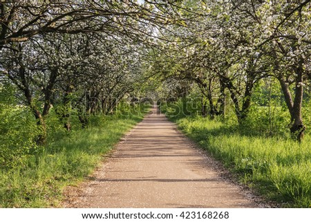 Footpath passage with ground way and apple tree blossom - stock photo