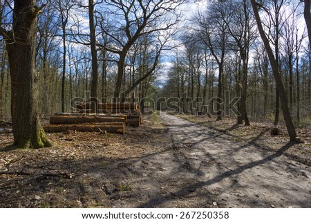 Footpath through a forest in spring