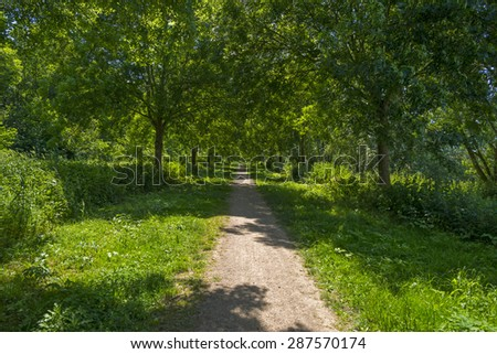 Footpath through a sunny forest in spring  - stock photo