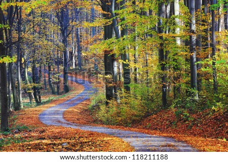 Footpath winding through colorful forest - stock photo