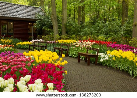 footpath with benches in colorful spring garden, Keukenhof, Holland - stock photo
